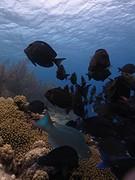 Onderwaterwereld van Bonaire vissen