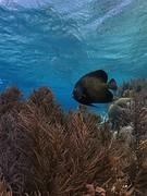 Onderwaterwereld van Bonaire vis