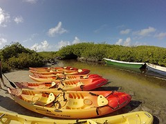 Mangrove kajakken