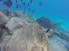 Snorkelen vissen