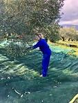 Olijven kammen