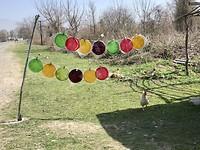 Fruit plakkaten