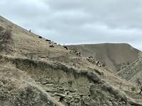 De koeien hebben magneten 🧲