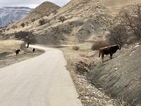 In de bergen van Dagestan