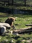 En nog een bruine beer