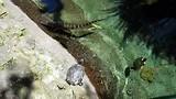 Alligator en schilpadden