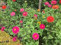 Prachtige bloemen