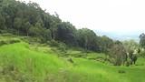VideoIndonesia