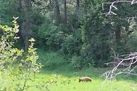 Een beer!