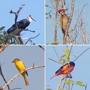 Vogels onderweg