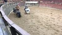 Rodeo, cowboys, paarden en een stier
