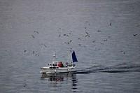 Thuiskomende vissersboot met begeleidend gevogelte