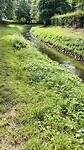 Mooie beek in Sittard