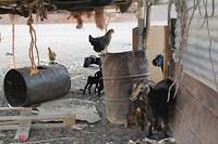 Op bezoek bij de Bedoeïenen
