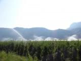 Appels hebben ook in Italië water nodig