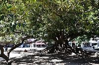 Een schitterende boom bij het parlementsgebouw