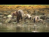 Tide Rip Grizzly Tours by Northern Lights Film Production