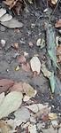 In het Parque Nacional Tayrona zijn de mieren naarstig aan het werk