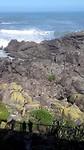 Zeehonden kolonie