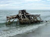 grote insecten lopen hier vanaf zee het strand op