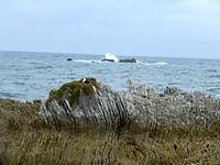 er zijn hier ook pancake-rotsen op het schiereiland van Kaikoura