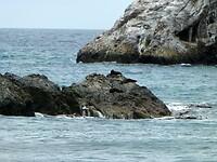 zeehonden, aalscholvers en meeuwen op de rotsen