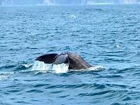 na enkele minuten dobberen duikt hij weer naar 1500 meter diepte