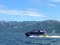 snelle catamarans met 50 toeristen op zoek naar walvissen