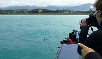 op de terugweg spotten we een hektor-dolfijn