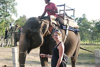 Chitwan : Olifant