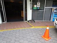 Deze hond ligt bijna de hele dag voor het hotel