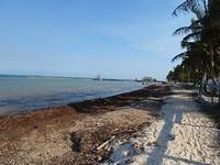 Het strand met een dikke rand aangespoeld zeewier