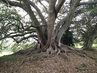Zelfde boom