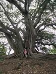 Grote rare boom