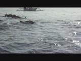 Dolfijnen om 8uur 's ochtends