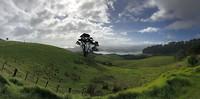 Natuur omgeving Coromandel