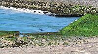 Zeehonden brouwersdam