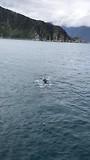 Bultrug walvis gespot