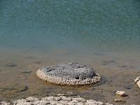 Opnieuw stromatolieten