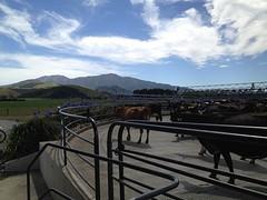 Mooi uitzicht uit de melkput!