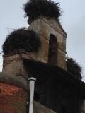 Ooievaarsnest op de kerktoren
