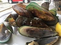 blue lip mussels
