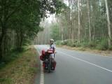 Touro eucalyptusbossen