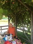 Onder de druivenranken eten