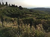 Wandeling bij Verona