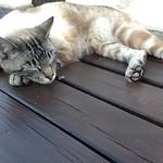 Terwijl ik t verslag bijwerkte kwam de campingkat op tafel liggen