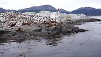 Robbeneiland, Beaglekanaal, Argentinie/Chili