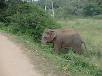 olifant steekt weg over