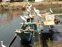 Vogels azen op een vers gevangen visje.