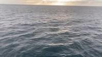 Galapagos deel 1